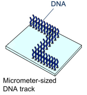 Figure.2:The schematic diagram of microchannel.