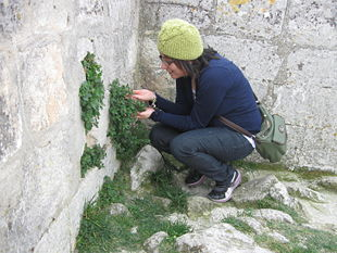 Krystalle examining nature at the windy Château des Baux.