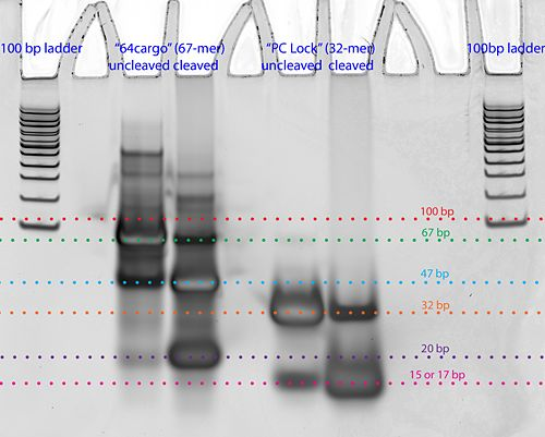 Photocleavage test 1-annotated.jpg