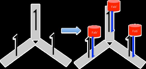 Figure 1B-FAB'.