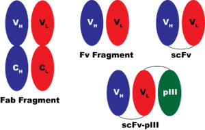 JCA-Antibody3.png