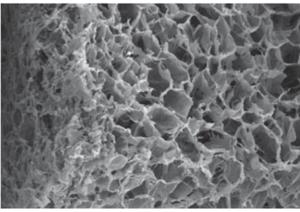 A TEM image of a porous collagen sponge [6]
