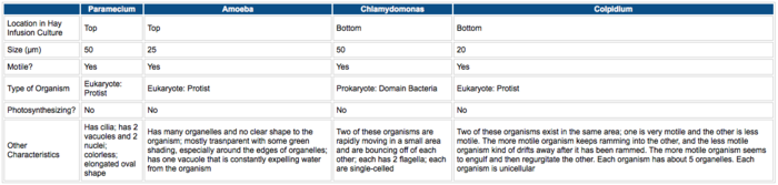 The above table shows information about each of the four organisms that were identified in the Hay infusion culture using a dichotomous key. The four organisms identified were paramecium, amoeba, chlamydomonas, and colpidium.