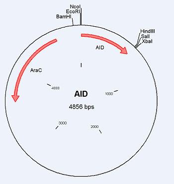 UW AID.jpg