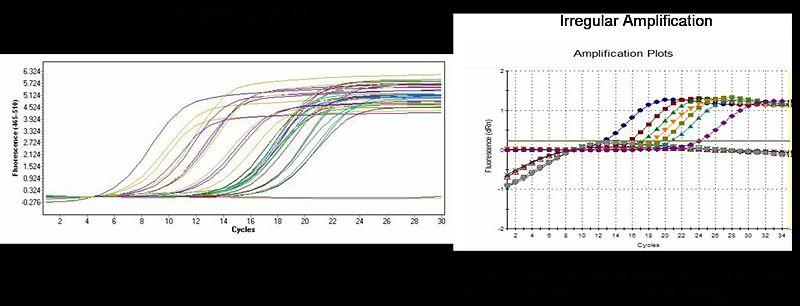 File:BioMicro Amp plots-2.jpg