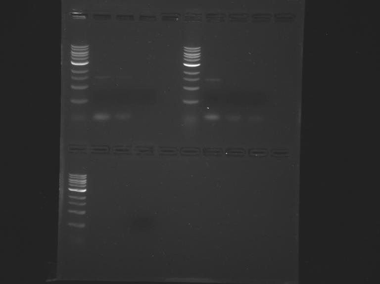 File:S15-M1D4 TR-Ylw-Prpl-Blue.jpg