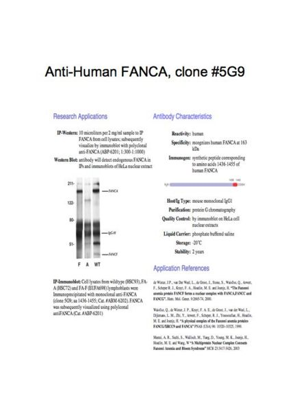 File:AntibodyFANCA5G9.jpg