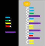 BIOMOD-TNJ-azobenzen5.png
