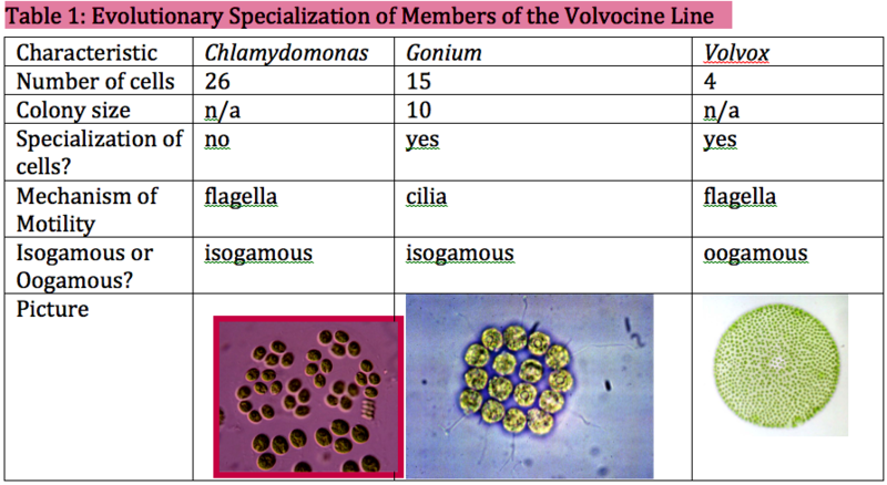 File:Table 1 Lab 1 HHS.png