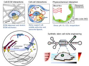 Micro- and nanoengineering toolkits for stem cell biology (unpublished)