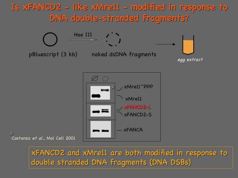 File:Alex-D2 shift assay basics.jpg