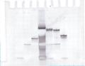 Thumbnail for version as of 15:44, 1 November 2011