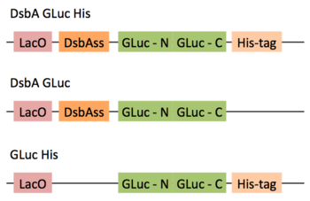 GLuc Plasmids Week2.png