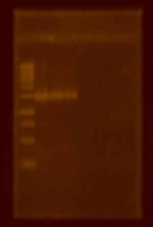 PCR.Daniel&Pae.31Mayo.Fibo.JPG