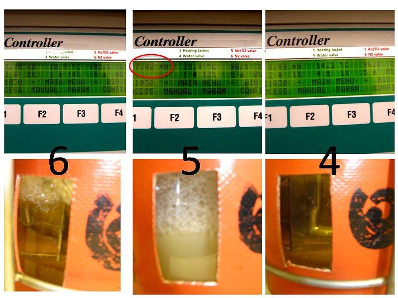 File:Fermentation 456.jpg