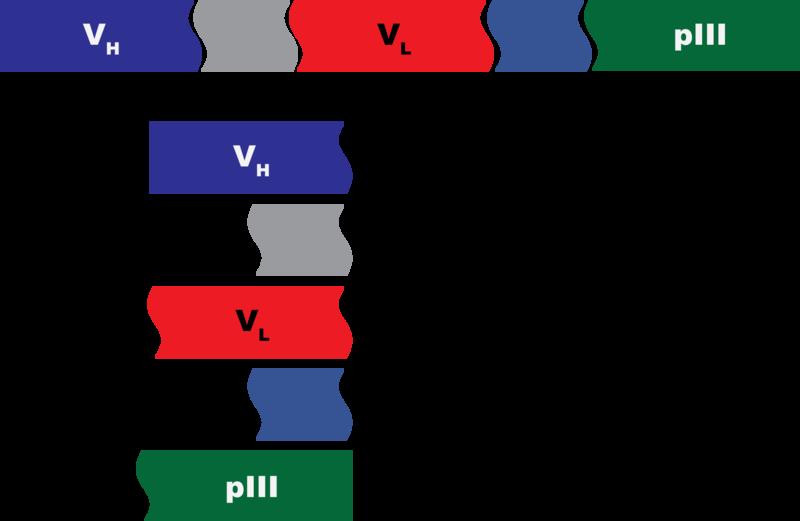 File:JCA fusionproteinQuiz1.png