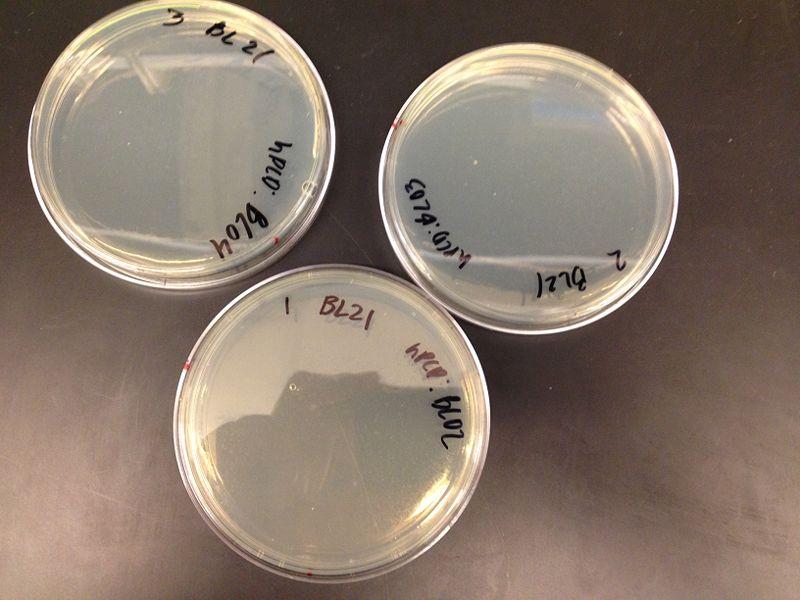 File:Plates 1 5 2013.jpg