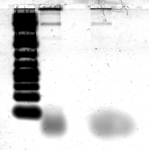 File:Spheregold-1--SYBR Gold-.png