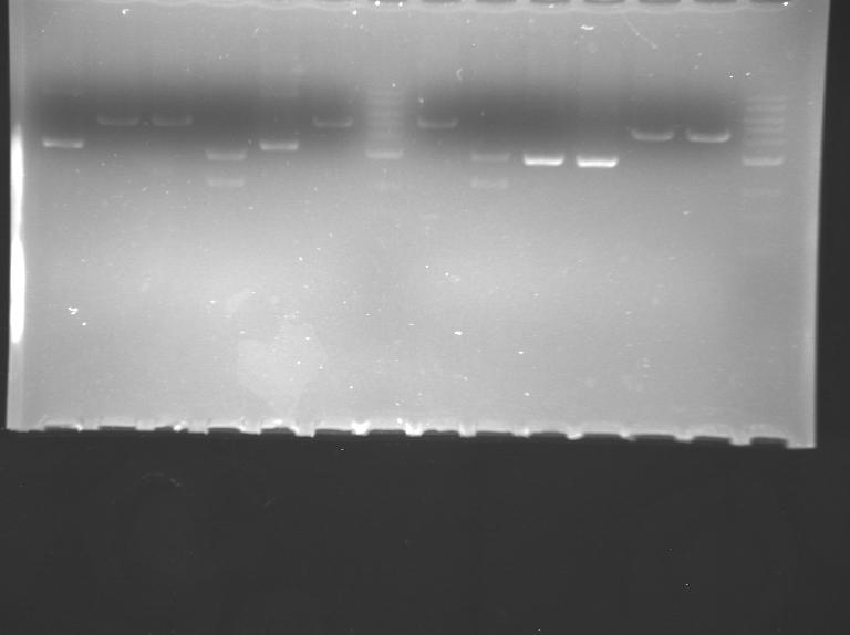 File:WR Blue high DD20109 F14.bmp