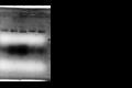 Thumbnail for version as of 02:52, 3 September 2015