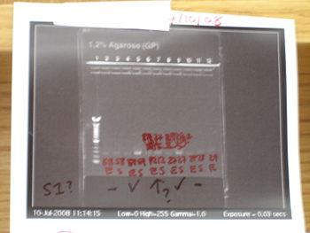 PCR 1216.JPG