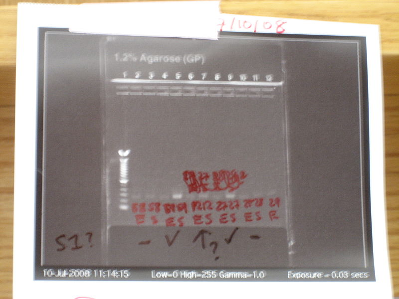 File:PCR 1216.JPG