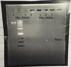 PCR Bosco.jpg