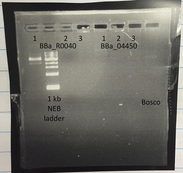 File:PCR Bosco.jpg