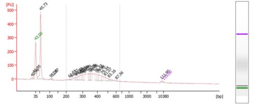 Bioanalyzer skinks plate2.png