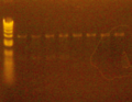 Thumbnail for version as of 18:55, 8 March 2011