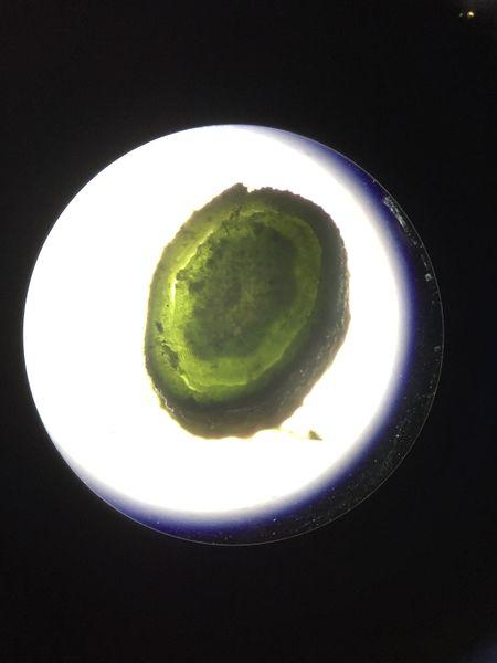 File:Plant Sample 5 Rachel Weger.JPG