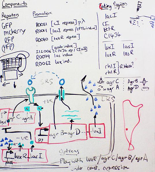File:Igem-whiteboard.jpg
