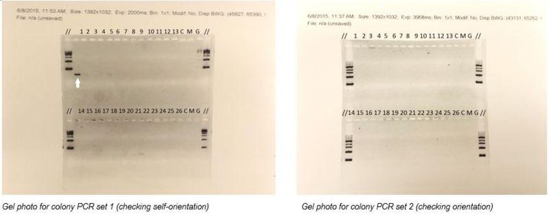 File:PCR photo.JPG