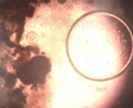 Thumbnail for version as of 16:17, 6 July 2014
