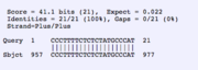 BLAST2 seq for fwd primer and CLN1