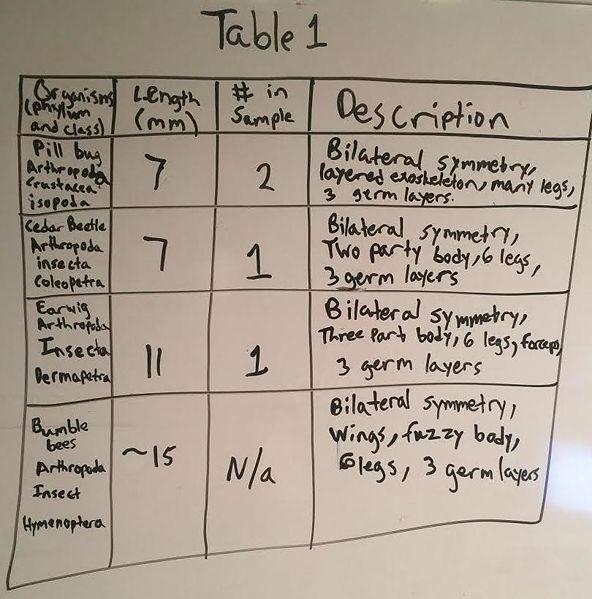 File:Invertabrate table.jpg