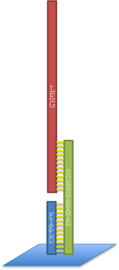 Figure 5. Schematic view of the leg DNA sequence