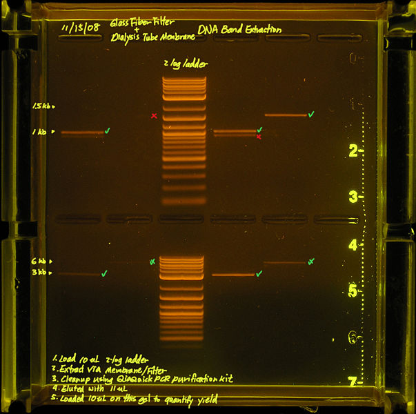 File:Filter Membrane Gel Extraction Results.annotated.jpg