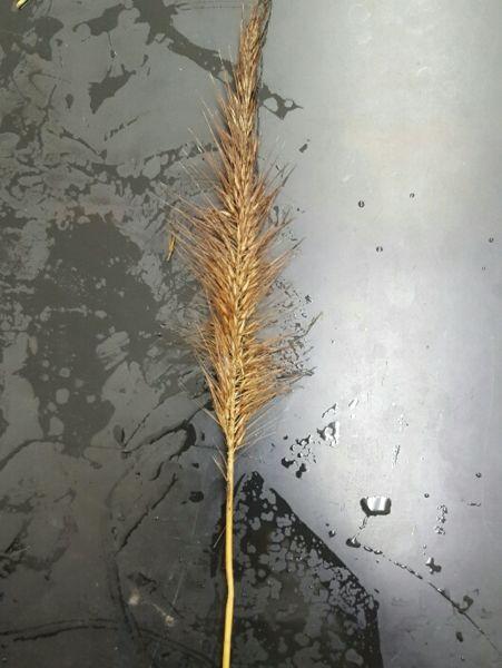 File:Plant 5.jpg