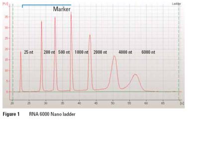 RNA nano ladder.png