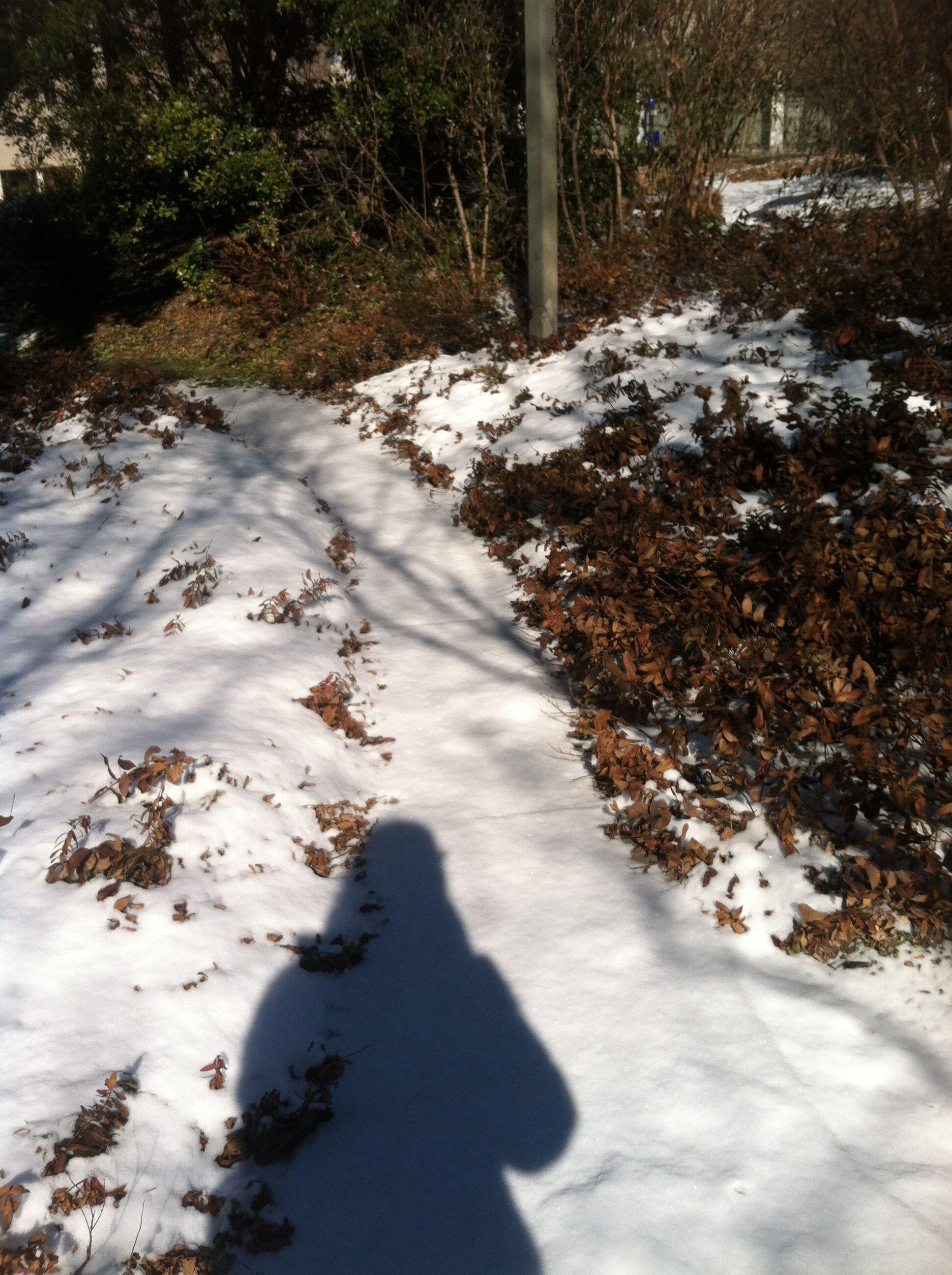 Transect3 snow2 jcm.jpg