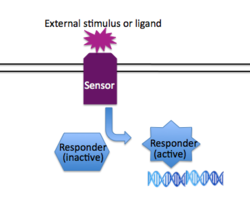 General Scheme for Two Component Signaling Image from N. Kuldell.