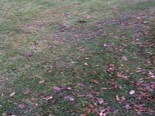 Grasstrasect5plantaelab.jpg