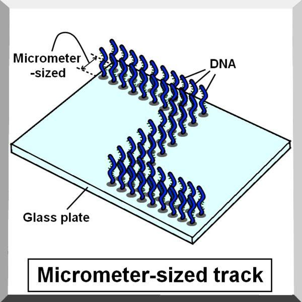 File:Micrometer sized track.jpg