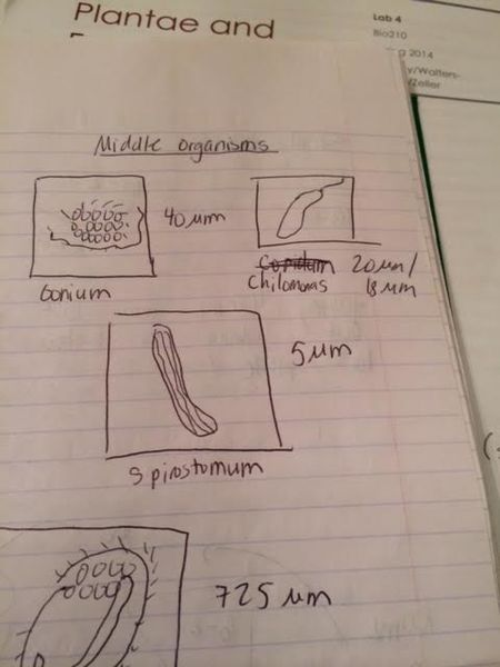 File:Middle organisms.png