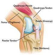 Source A: Quadriceps tendon taken for autograft ..
