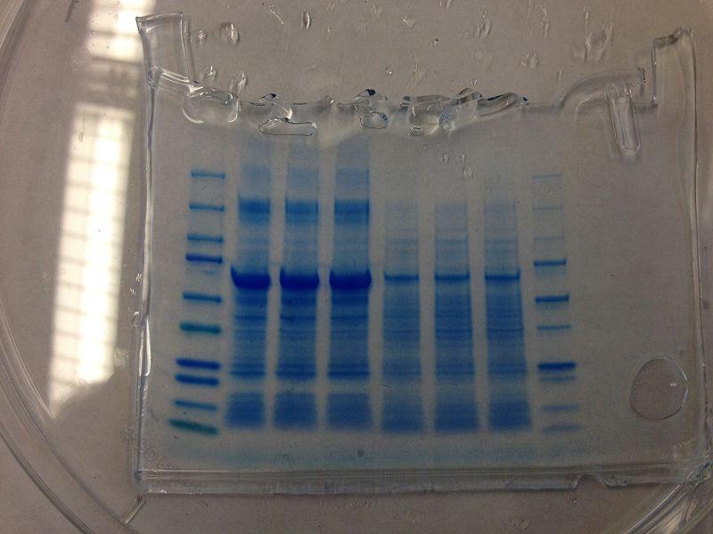 File:S13 M2D7 WF Blue.JPG