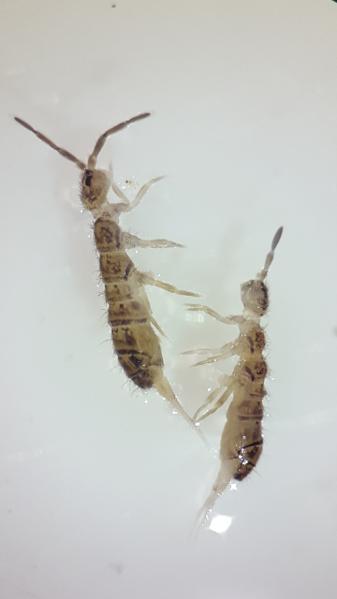 File:Termites.png