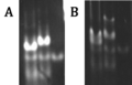 Thumbnail for version as of 16:02, 27 October 2012