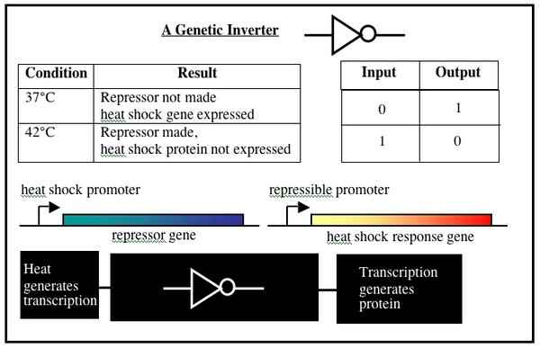 Be109geneticinverter.jpg